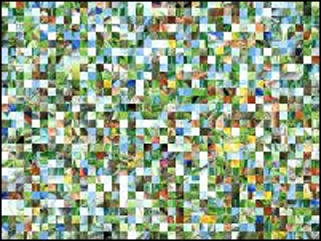 Belarussian Puzzle №156014