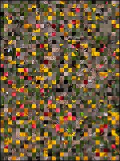 Belarus Puzzle №16687
