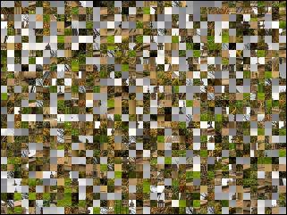 Belarus Puzzle №17069