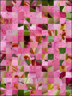 Belarussian Puzzle №20059