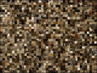 Belarus Puzzle №64294