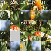 Puzzle №4315