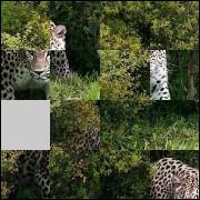 Puzzle №87979