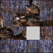 Puzzle №88969
