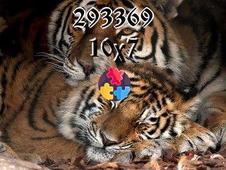 Puzzles flottants №293369