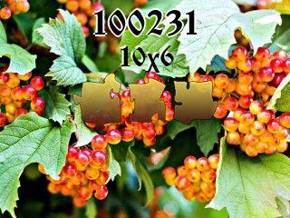 Puzzle №100231