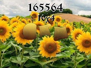 Puzzle №165564