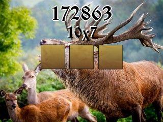 Puzzle №172863