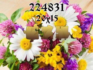 Puzzle №224831