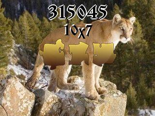 Puzzle №315045