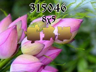 Puzzle №315046