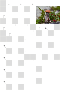 Crossword №54339