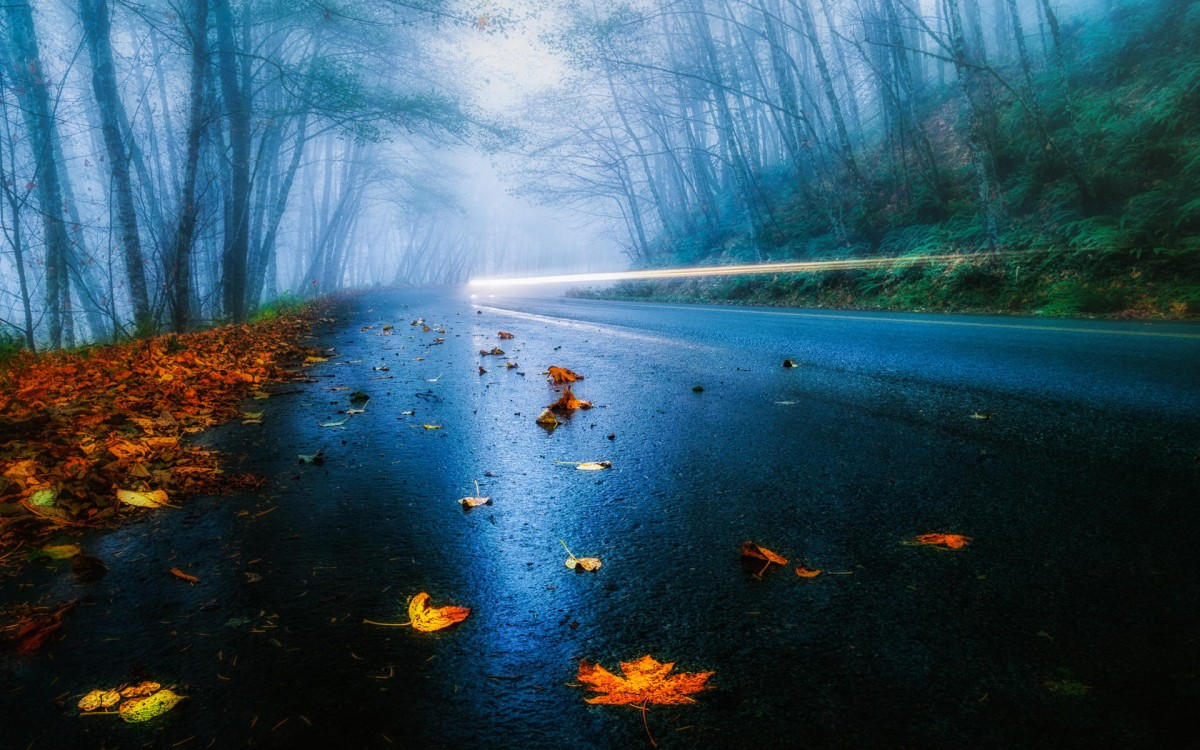 Jigsaw Puzzle Solve jigsaw puzzles online - And in front of the fog
