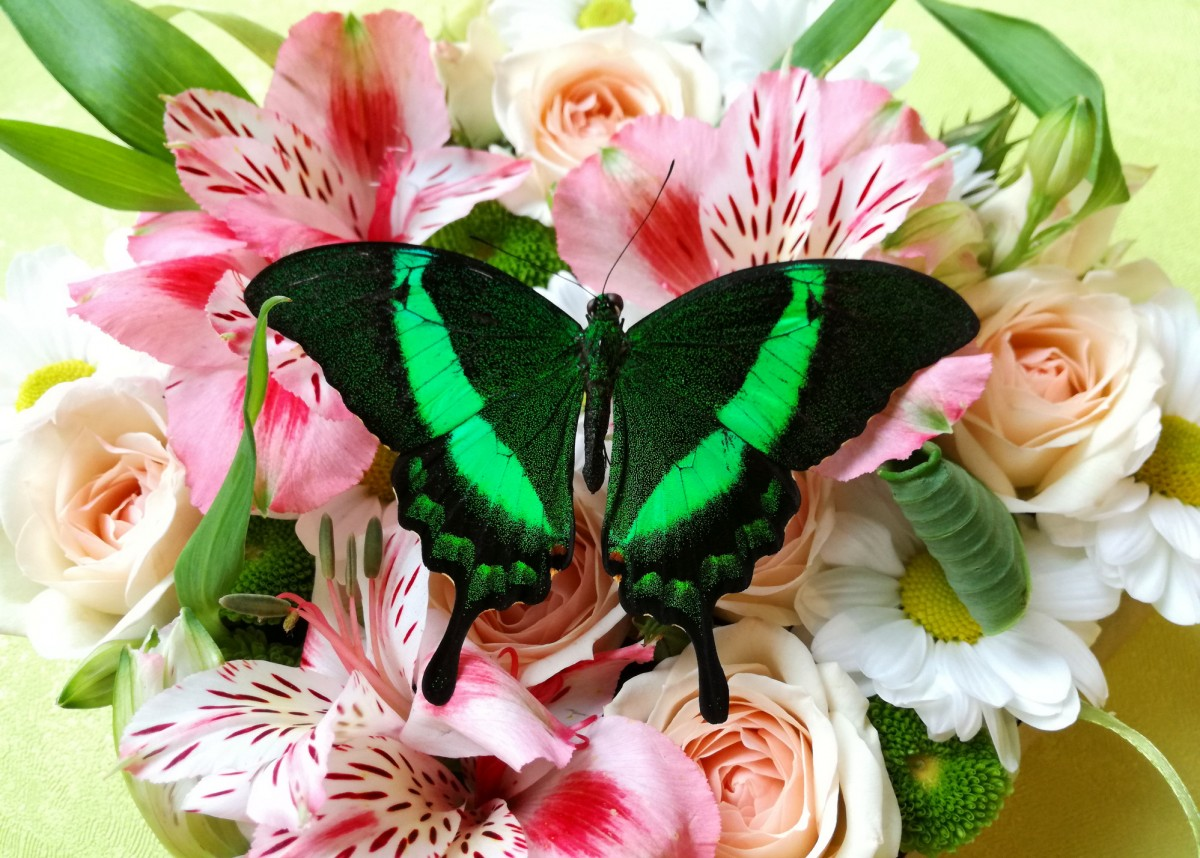 Jigsaw Puzzle Solve jigsaw puzzles online - Butterfly and bouquet