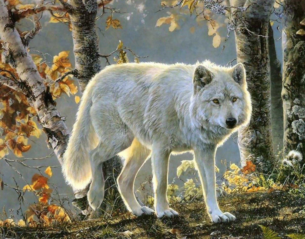 Jigsaw Puzzle Solve jigsaw puzzles online - White wolf