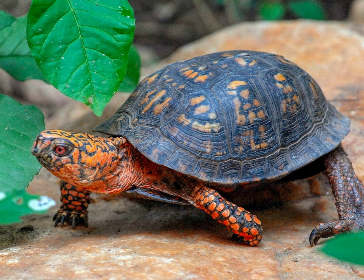 Jigsaw Puzzle Turtle