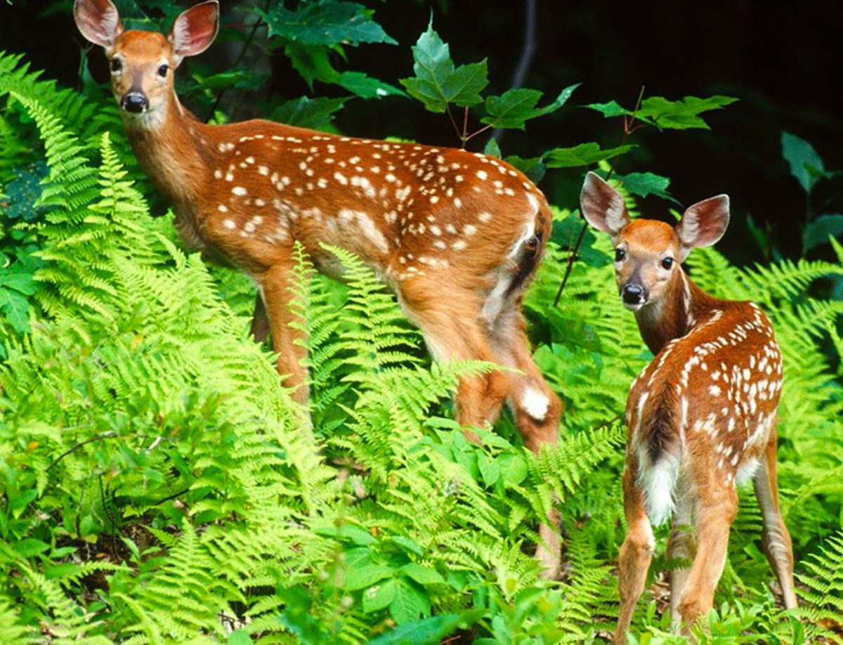 Jigsaw Puzzle Solve jigsaw puzzles online - Two deers