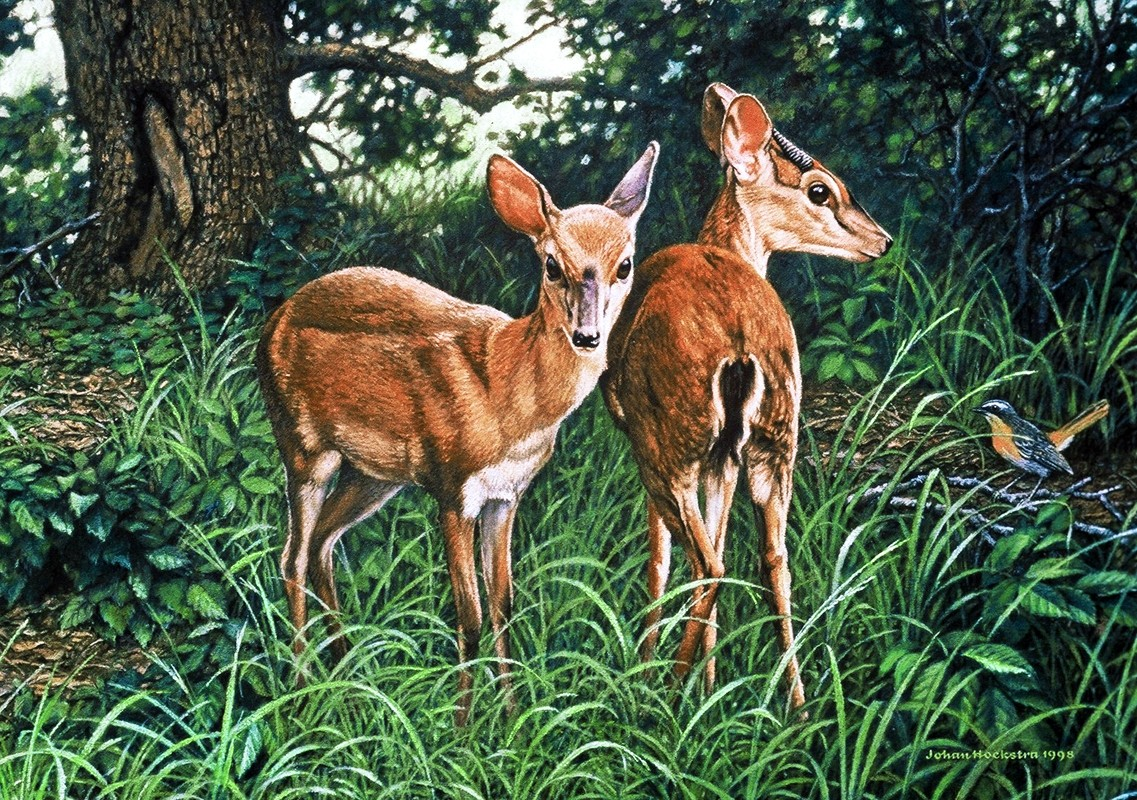 Jigsaw Puzzle Solve jigsaw puzzles online - Two deer