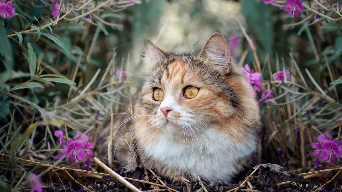 Jigsaw Puzzle Solve jigsaw puzzles online - Cat in flowers