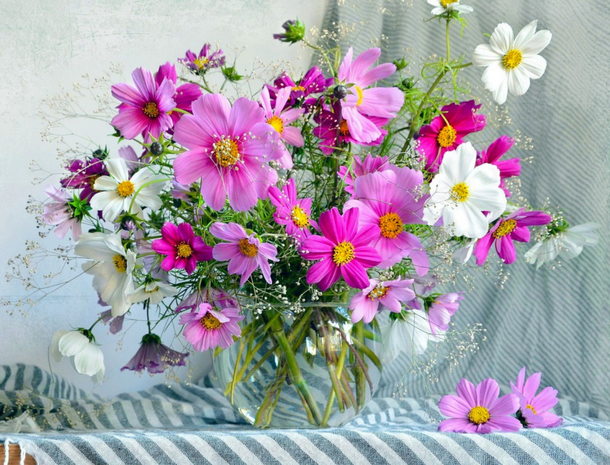 Jigsaw Puzzle Solve jigsaw puzzles online - Cosmos in a vase
