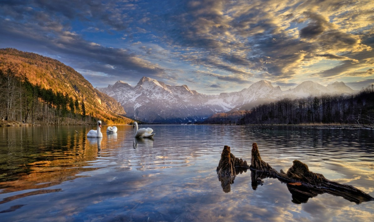 Jigsaw Puzzle Solve jigsaw puzzles online - Swans on the lake