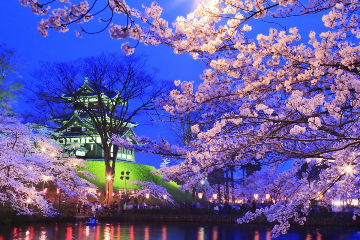 Jigsaw Puzzle Solve jigsaw puzzles online - Night Sakura