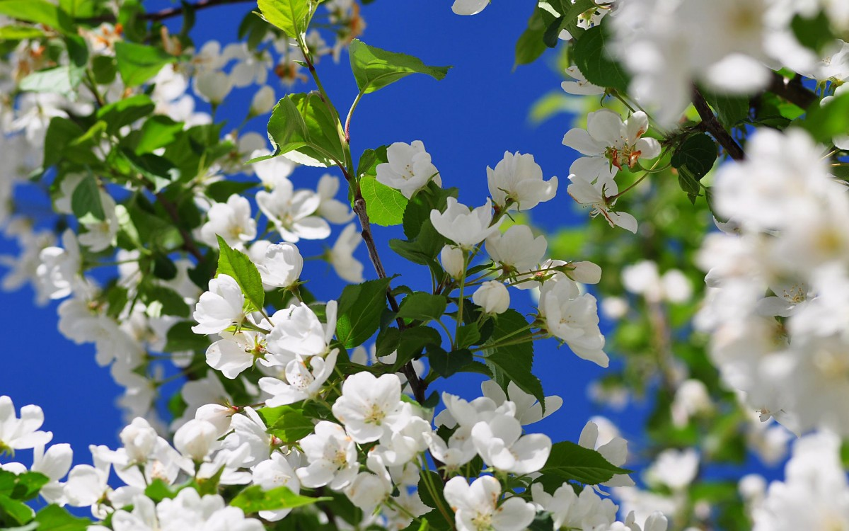 Jigsaw Puzzle Solve jigsaw puzzles online - The charm of spring