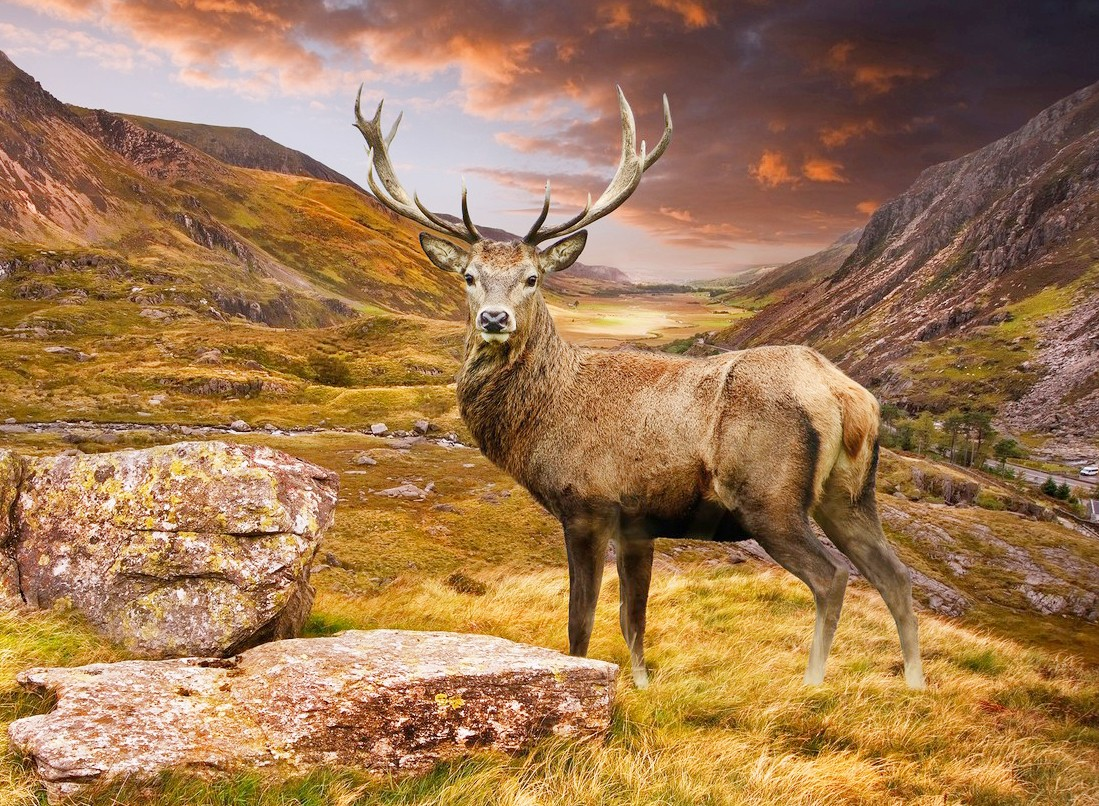 Jigsaw Puzzle Solve jigsaw puzzles online - Deer in the mountains