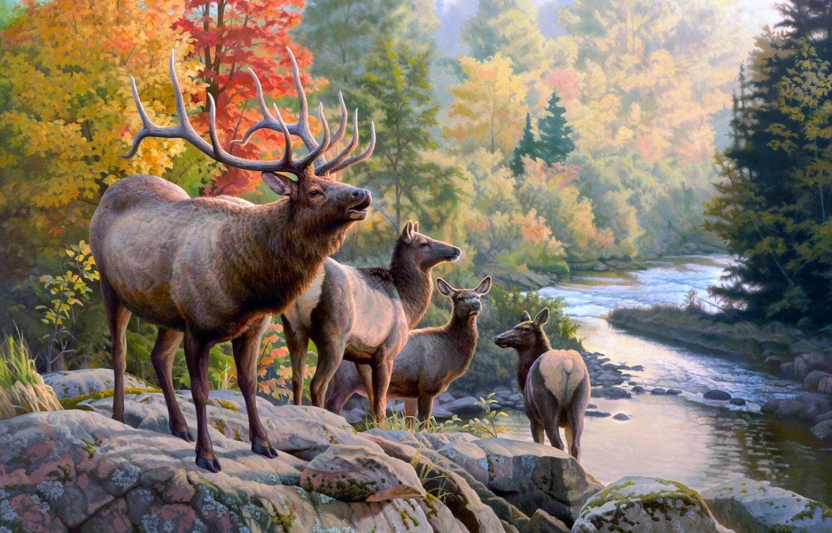 Jigsaw Puzzle Solve jigsaw puzzles online - Deer in the woods