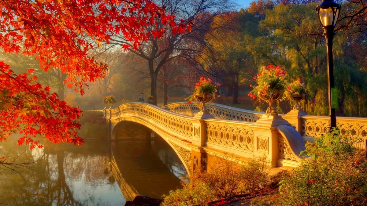 Jigsaw Puzzle Solve jigsaw puzzles online - Autumn haze