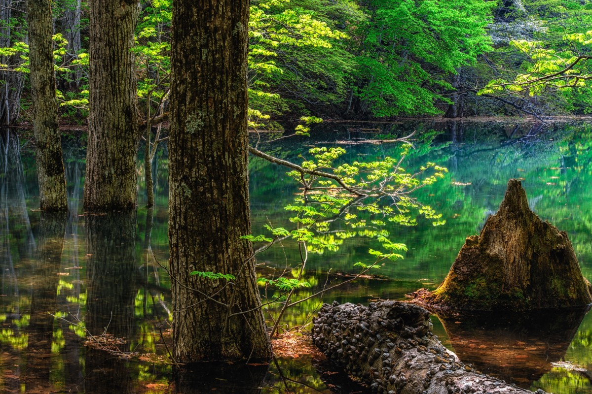 Jigsaw Puzzle Solve jigsaw puzzles online - Lake of the woods