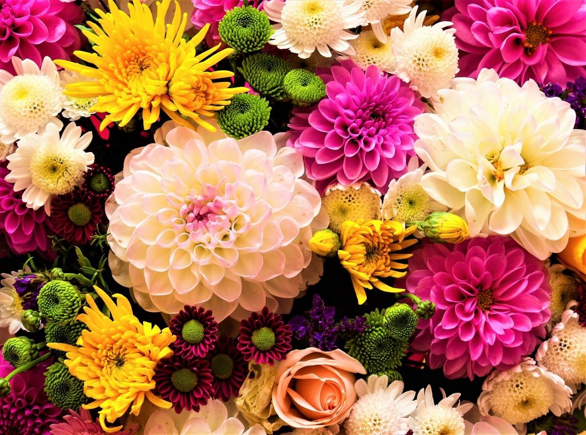Jigsaw Puzzle Solve jigsaw puzzles online - Colorful bouquet