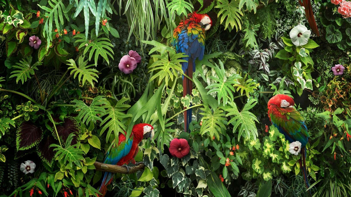 Jigsaw Puzzle Solve jigsaw puzzles online - Parrots among the flowers