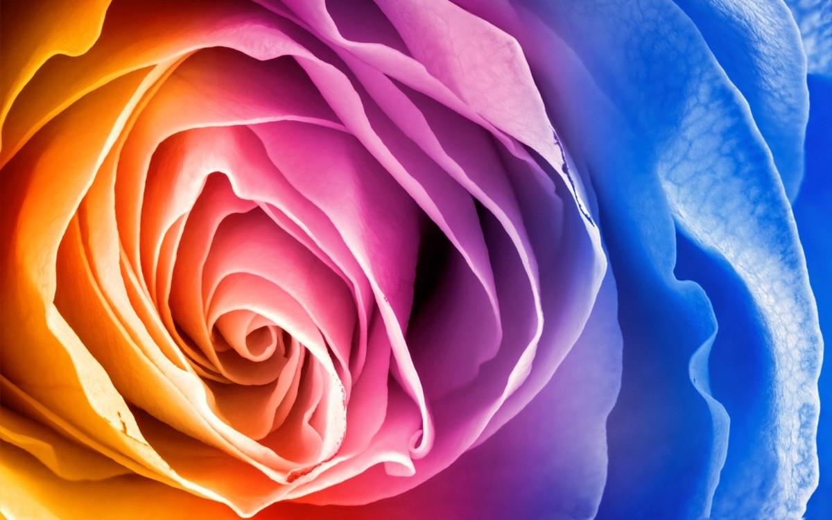 Jigsaw Puzzle Solve jigsaw puzzles online - Iridescent petals