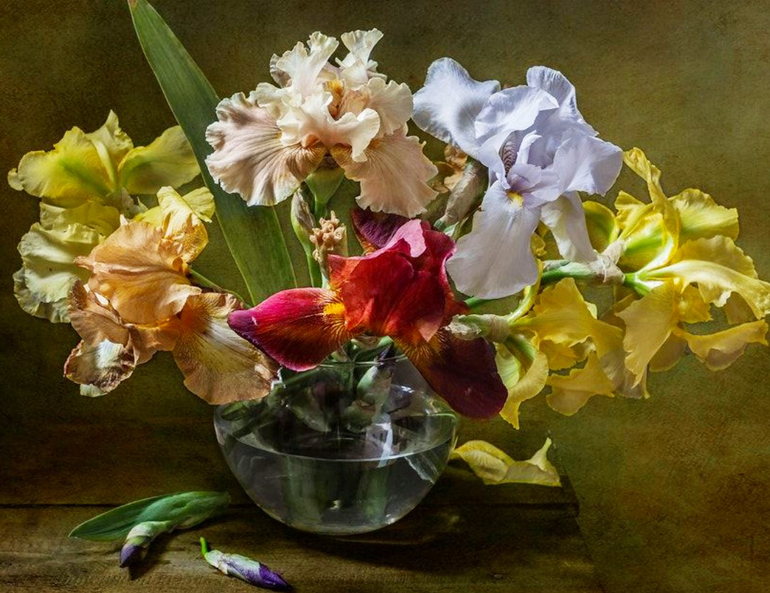 Jigsaw Puzzle Solve jigsaw puzzles online - Colored irises