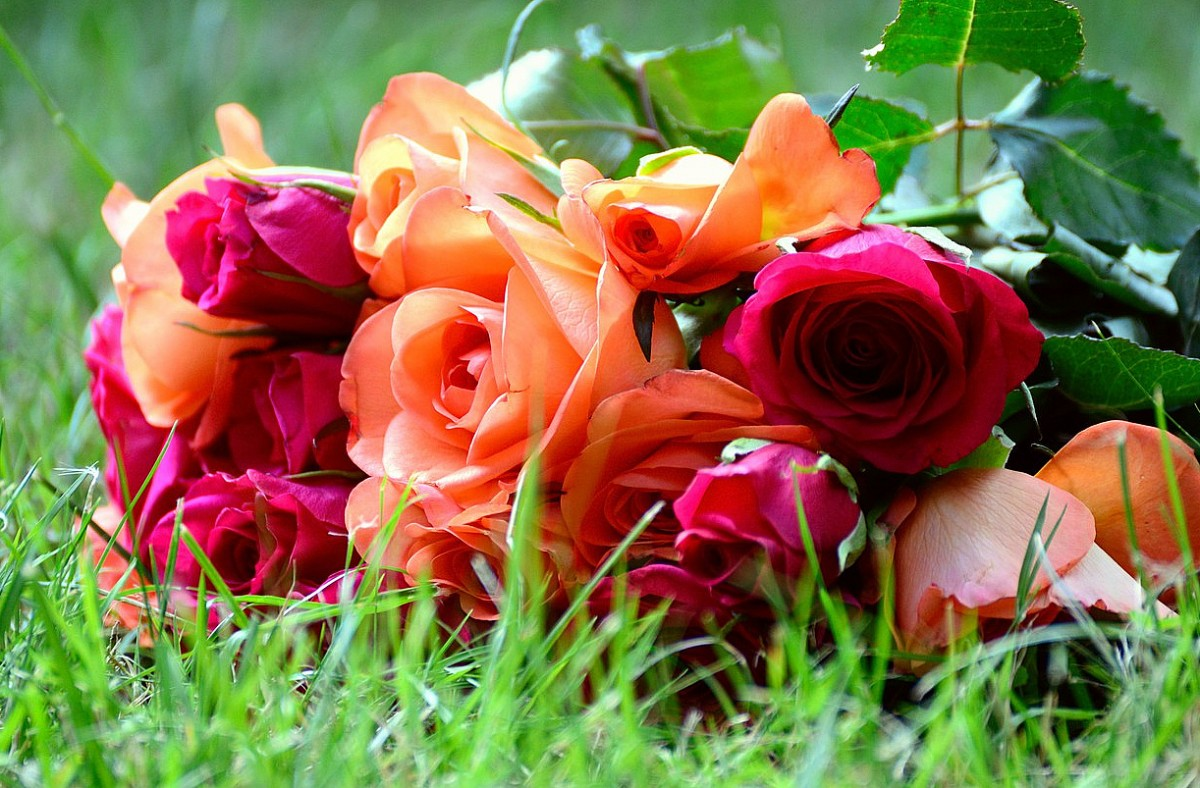 Jigsaw Puzzle Solve jigsaw puzzles online - Roses on the grass