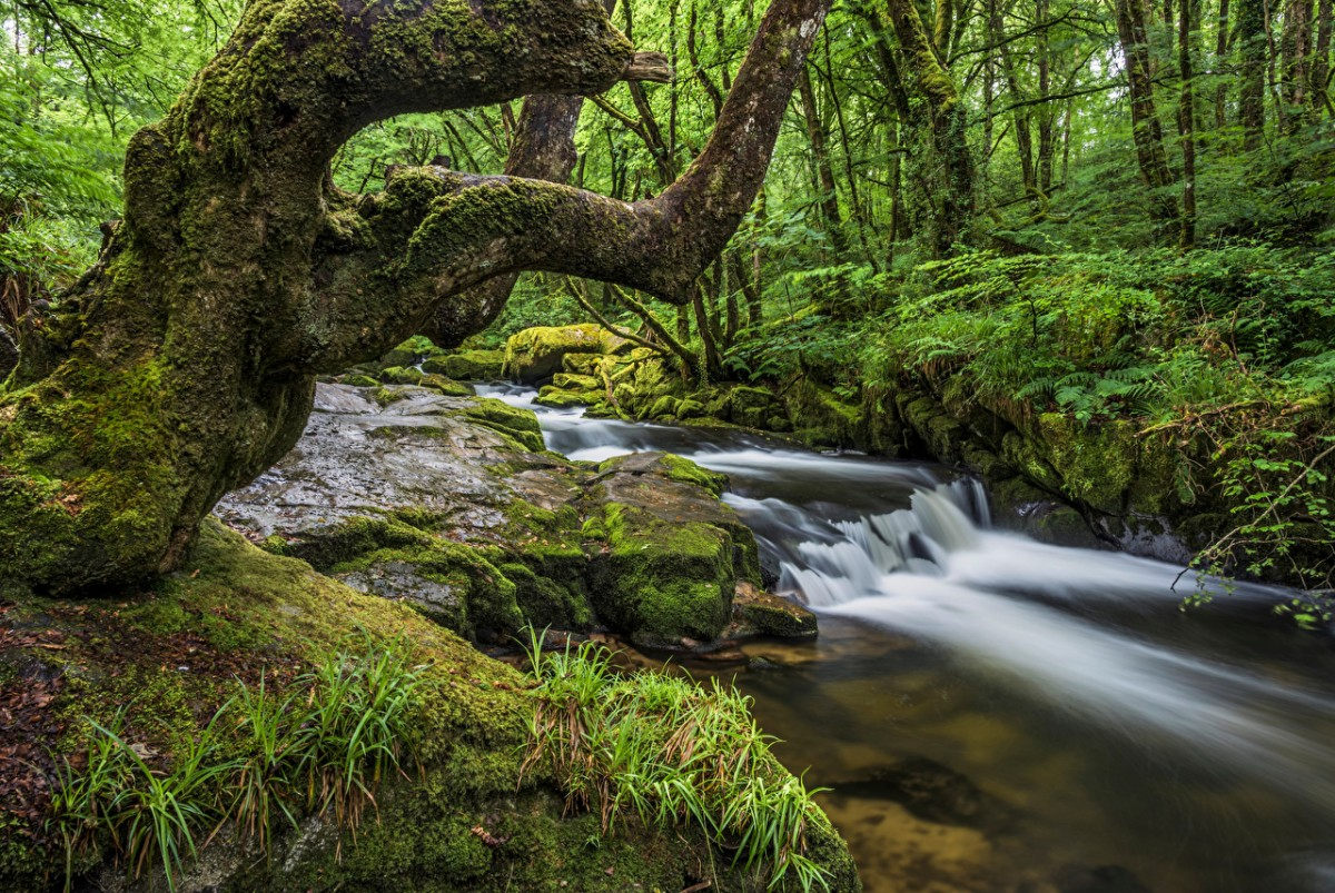 Jigsaw Puzzle Solve jigsaw puzzles online - The Creek in Cornwall