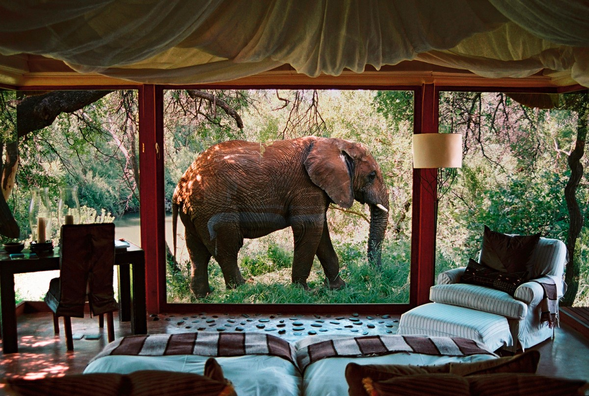 Jigsaw Puzzle Solve jigsaw puzzles online - Elephant outside the window