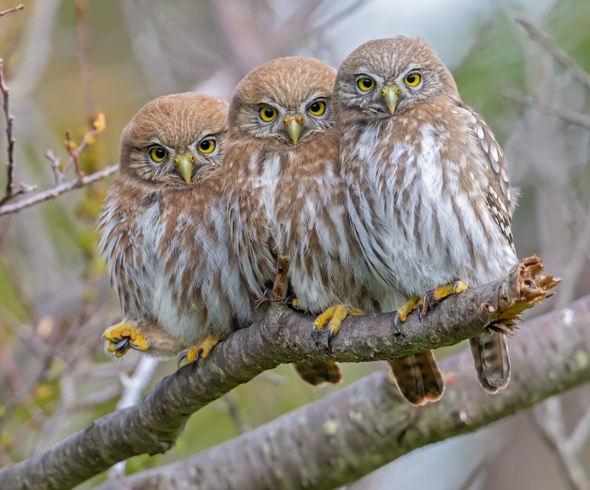 Jigsaw Puzzle Solve jigsaw puzzles online - Owlets