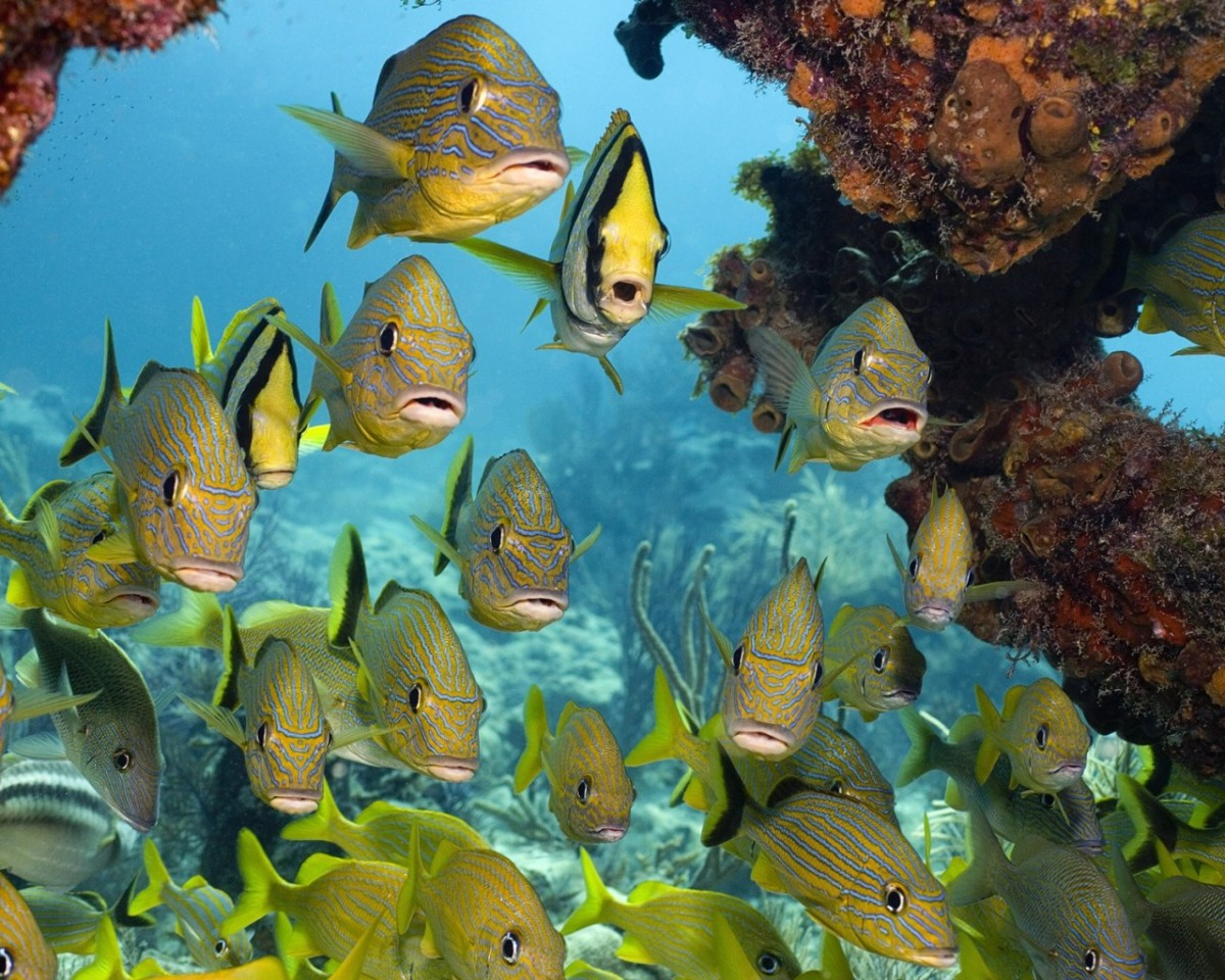 Jigsaw Puzzle Solve jigsaw puzzles online - A flock of fish