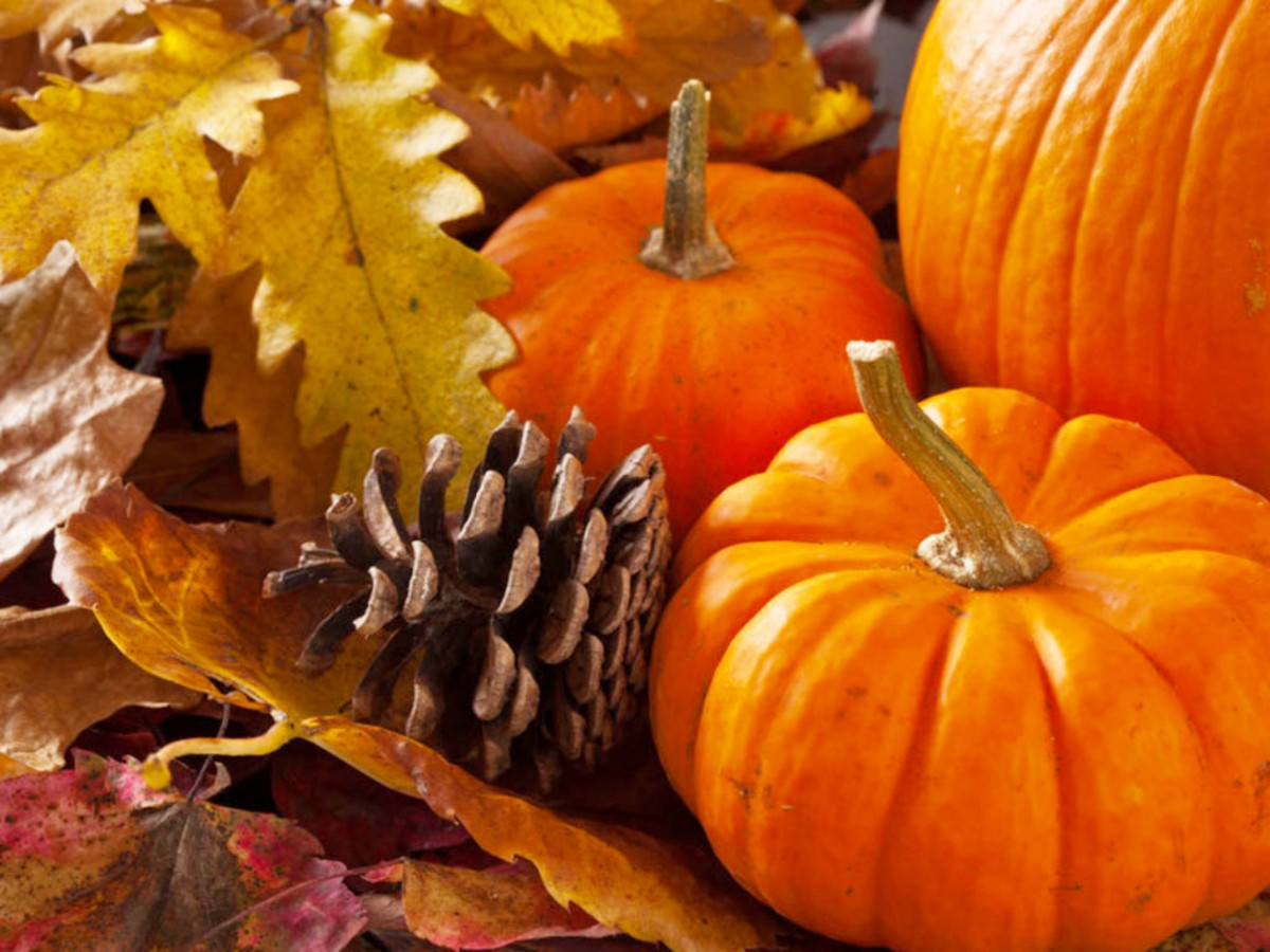 Jigsaw Puzzle Solve jigsaw puzzles online - Pumpkin and pine cone