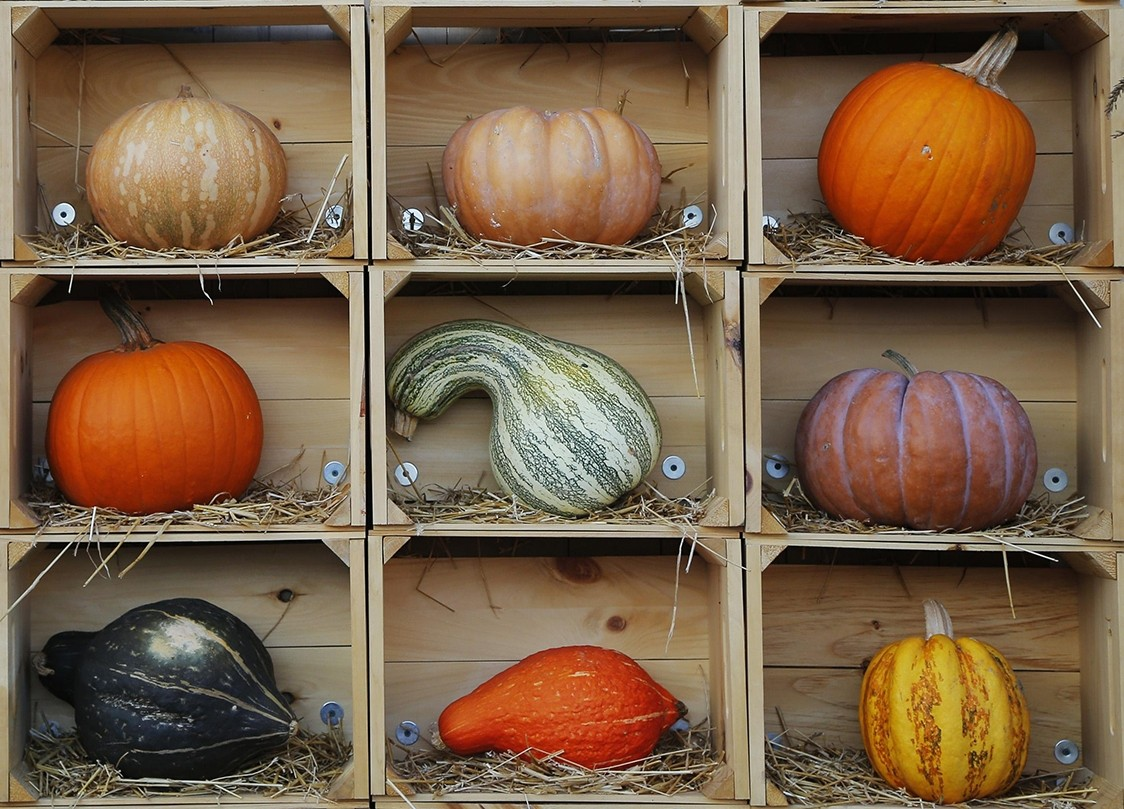 Jigsaw Puzzle Solve jigsaw puzzles online - Pumpkins on the shelves