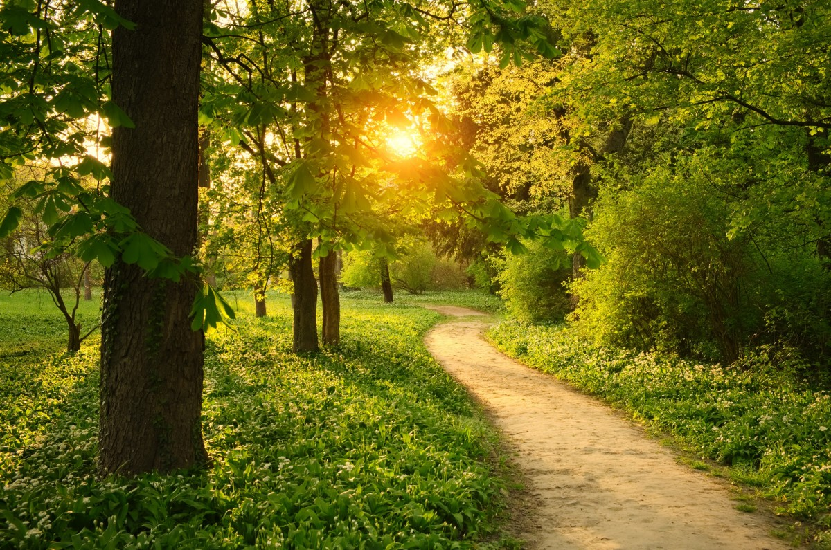 Jigsaw Puzzle Solve jigsaw puzzles online - Path in the Park