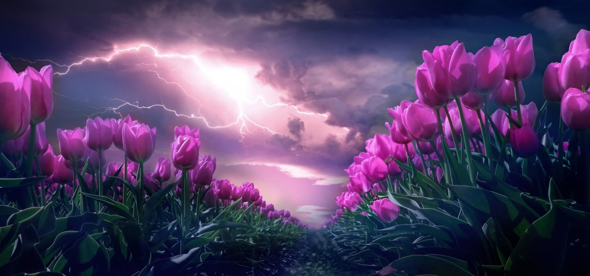 Jigsaw Puzzle Solve jigsaw puzzles online - Tulips and storm
