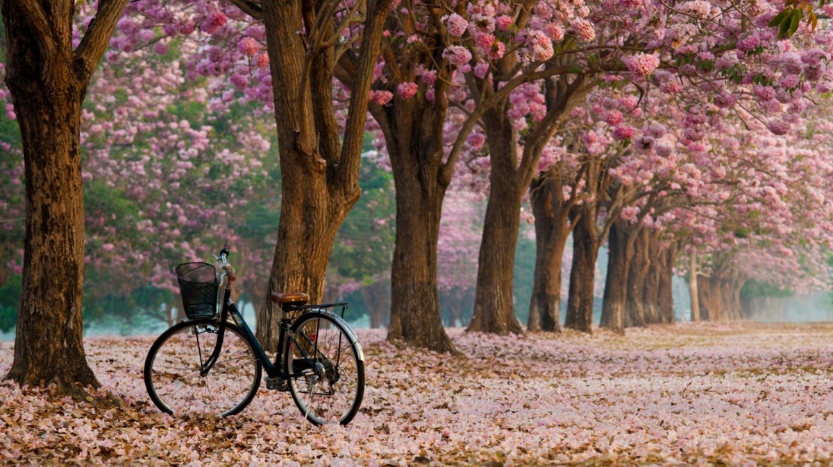 Jigsaw Puzzle Solve jigsaw puzzles online - The bike in the alley