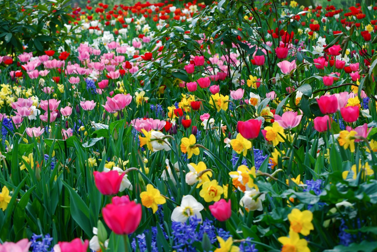 Jigsaw Puzzle Solve jigsaw puzzles online - Spring has come