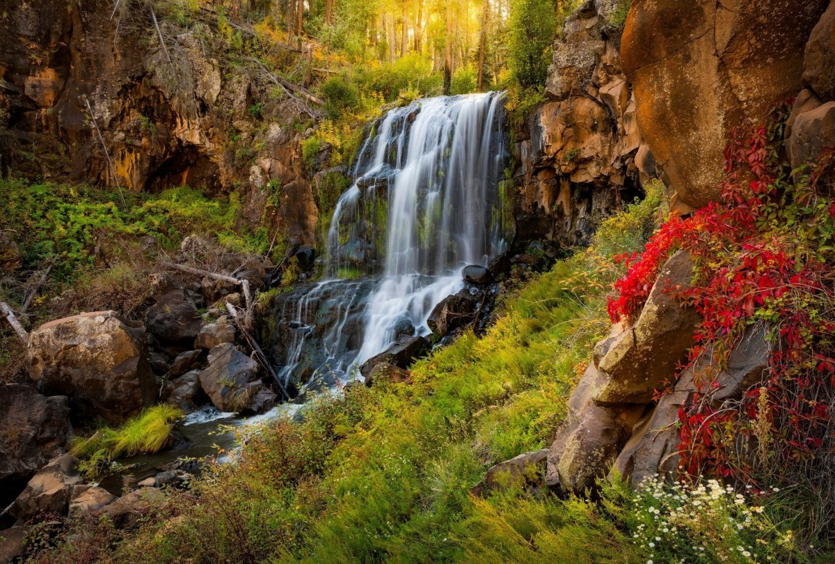 Jigsaw Puzzle Solve jigsaw puzzles online - Waterfall in the forest