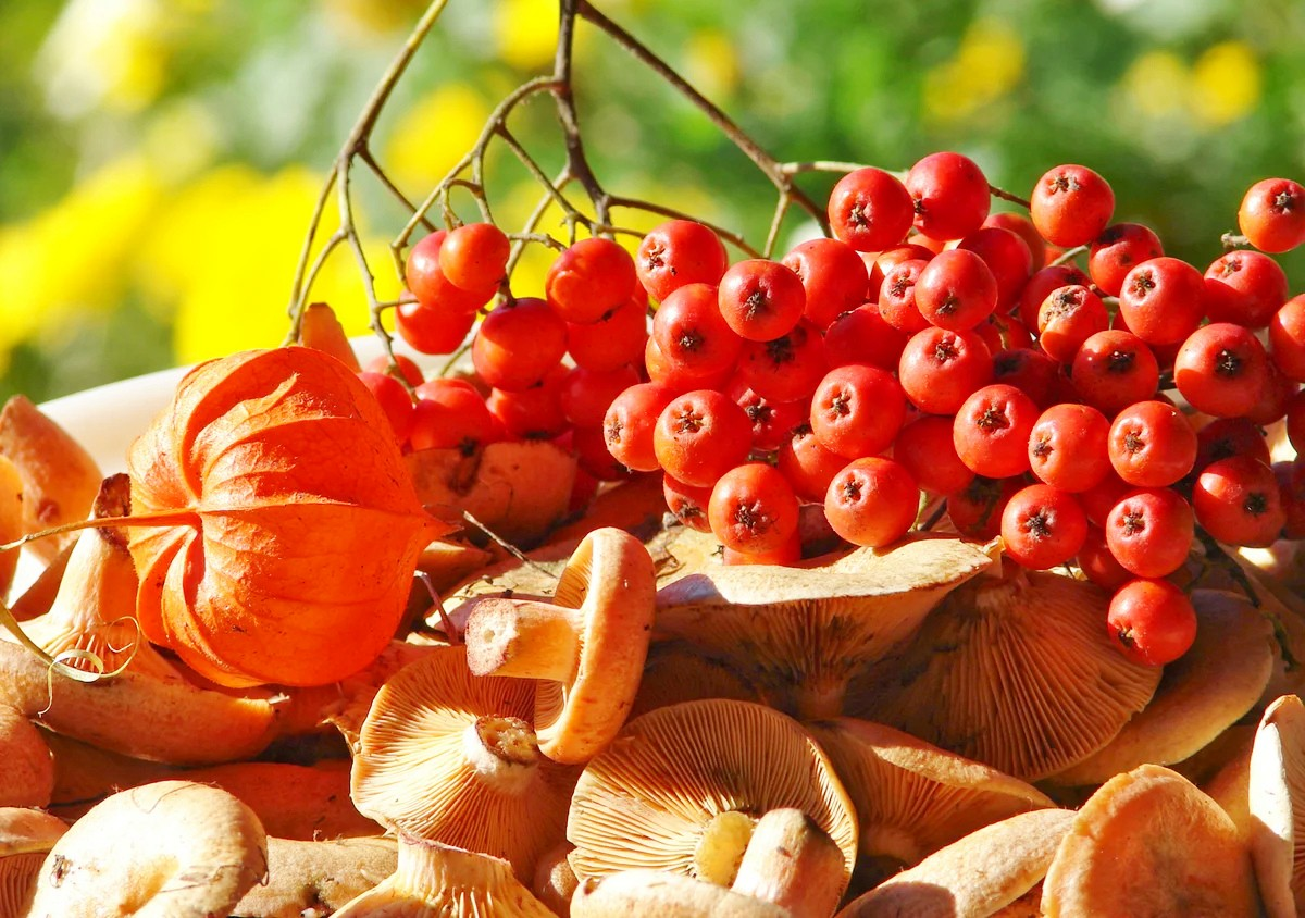 Jigsaw Puzzle Solve jigsaw puzzles online - Berries and mushrooms