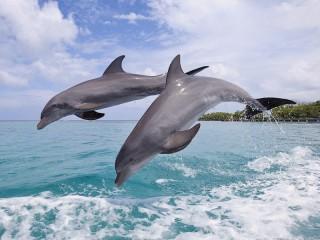 Собирать пазл 2 of the Dolphin онлайн