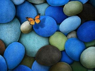 Собирать пазл Butterfly on the rocks онлайн
